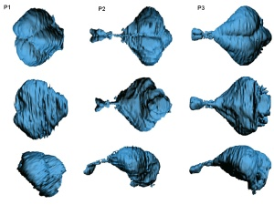 Reconstrucción del endocráneo de la especie fósil Pygoscelis calderensis, del Mioceno tardío (~8 millones de años) del desierto de Atacama, Chile