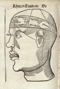 Los 3 ventrículos cerebrales