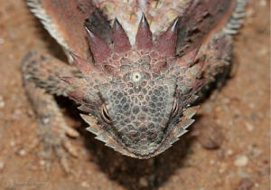 Fuente: http://reptilefacts.tumblr.com/page/51